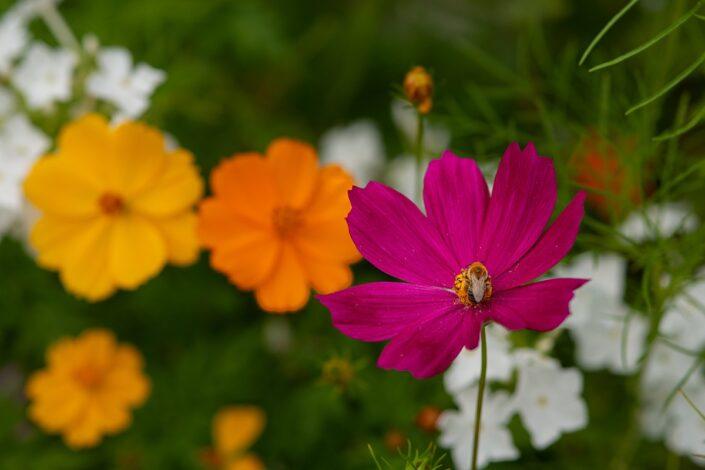 Garden_5761sx