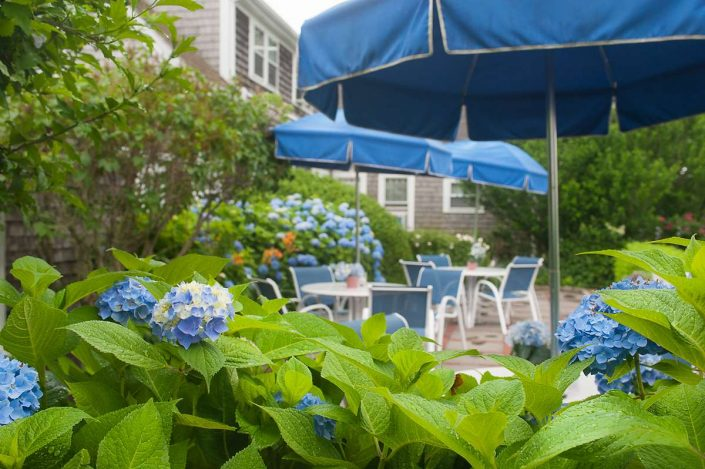 Blue hydranges in terrace garden at Ship's Knees Inn in East Orleans, Ma.